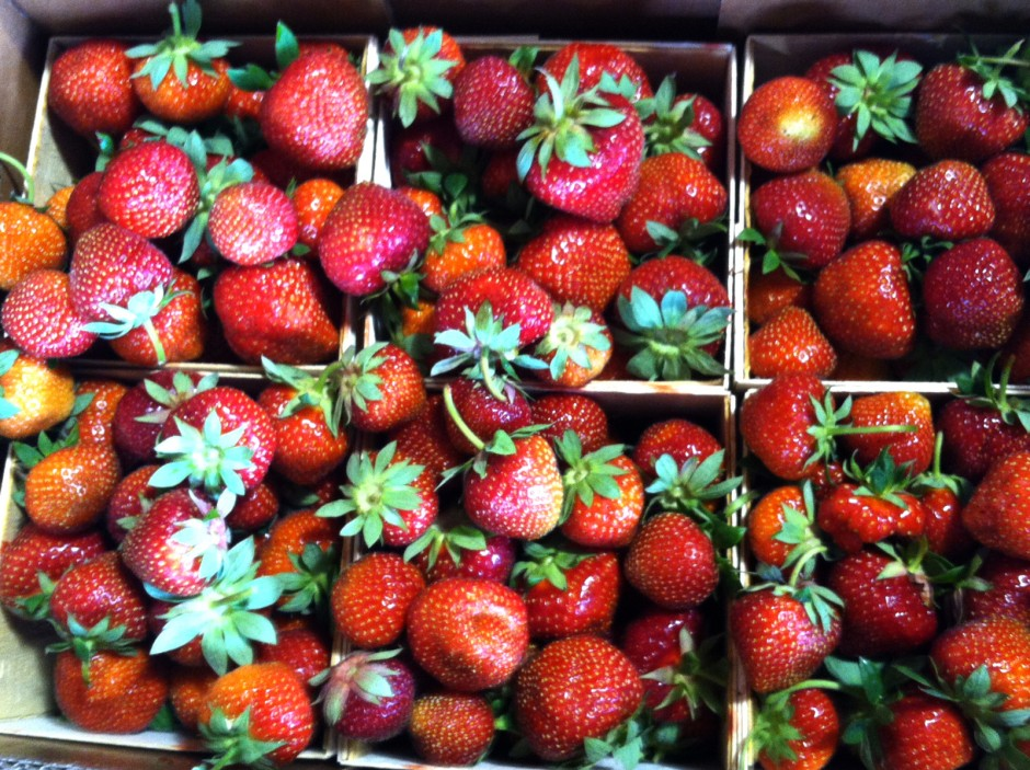 Strawberries from Lorence's Berry Farm