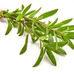 fresh thyme sprigs