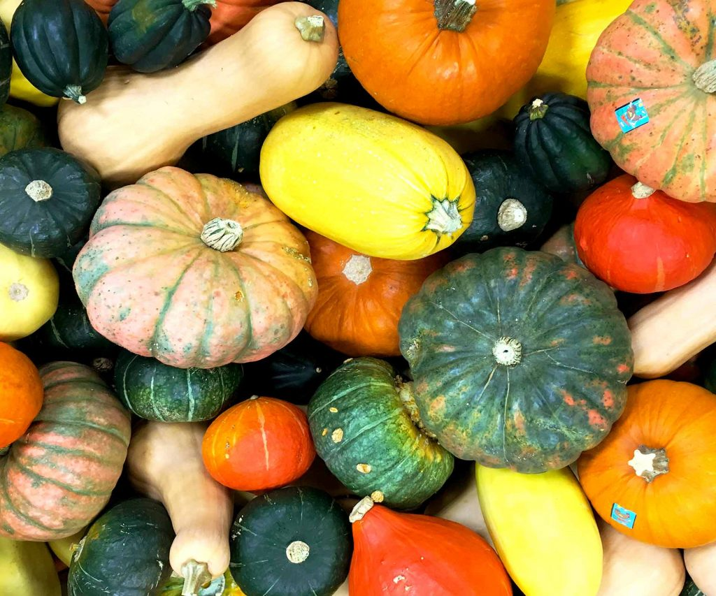 Local Assorted Squash | Ferndale Market